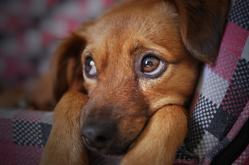 Common signs when your pet is ill