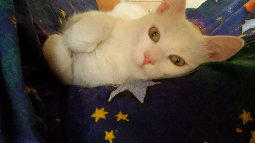 cat's cute moments